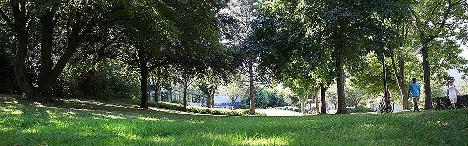 Grüner Campus – in der heißen Jahreszeit spenden die vielen Bäume auf dem Gelände der Universität Schatten.