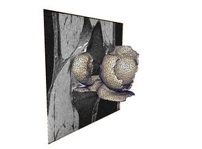 Abbildung (Zuse-Institut Berlin): MRT-Aufnahme des Kniegelenks und zugehöriges Finite-Elemente-Gitter des Knorpels.
