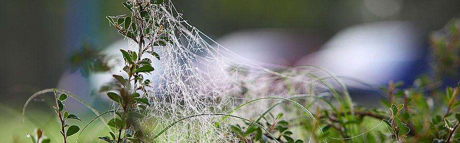 Ein Netzwerk ist ein System, das aus Knoten und Verbindungen besteht. Solche Netzwerke lassen sich in vielen Bereichen des Alltags und der Forschung finden.