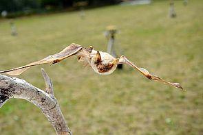 Foto: DFG-Forschergruppe BATS