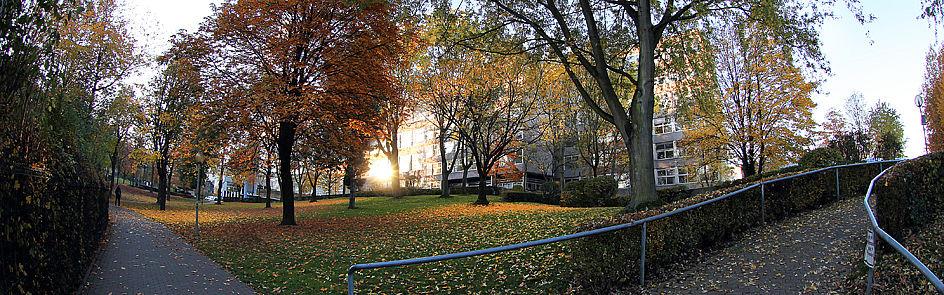 Der Uni-Campus: Im Frühjahr und Sommer viel Grün – im Herbst ein buntes Blättermeer.