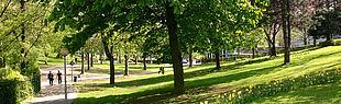 Foto einer Wiese (Foto: Universität Paderborn)